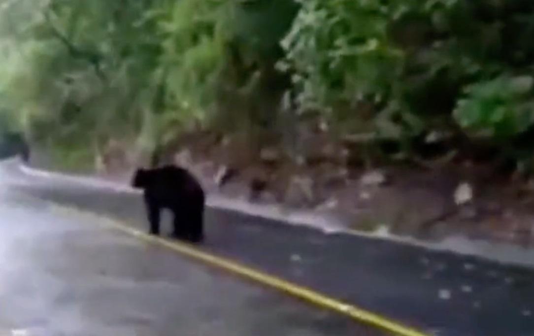 Indigna video de hombre rociando gas a oso en NL