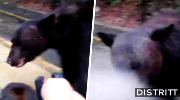 Hombre rocía gas lacrimógeno a oso en Nuevo León; video causa indignación